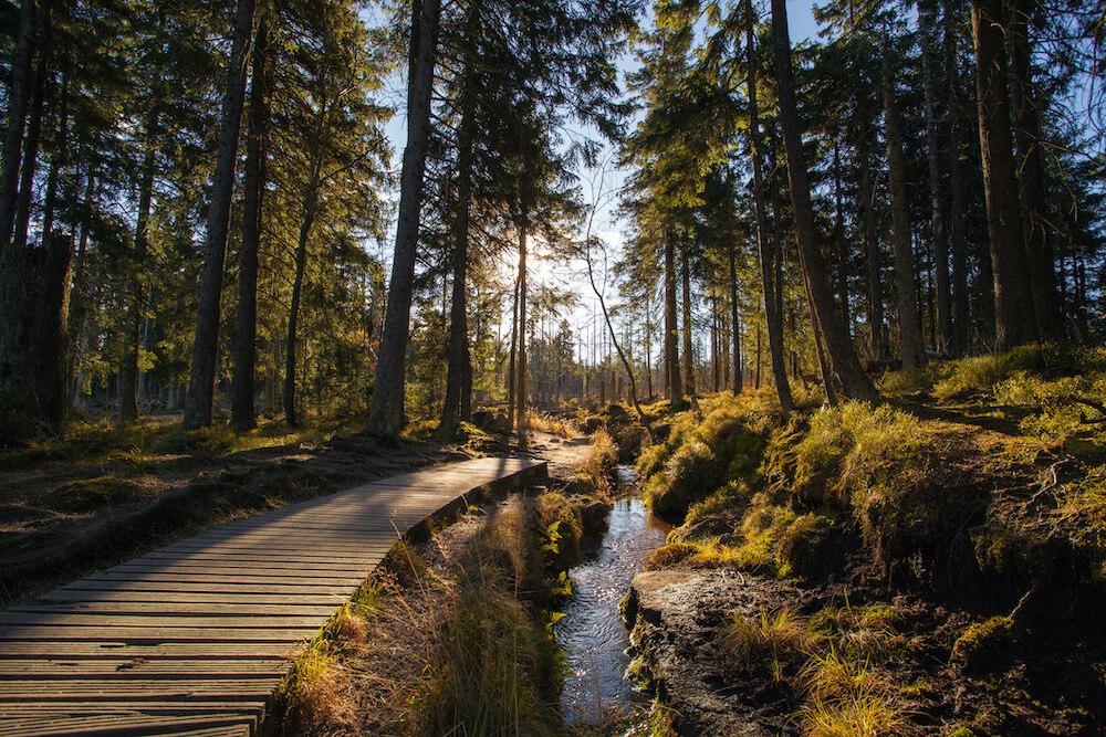nachhaltig wald natur heizen beratung